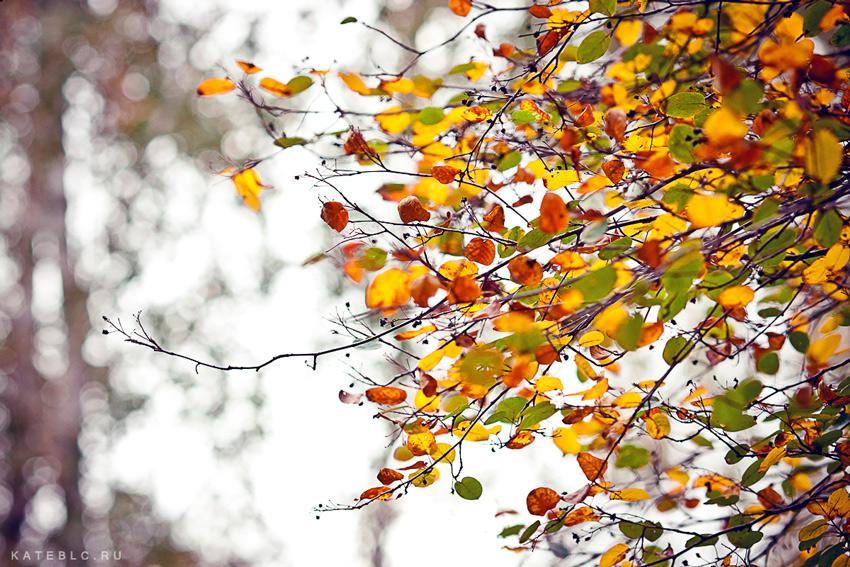 Осень. Осенние листья. Желтые листья. Осенняя фотосессия. Фотография осени. Фотограф Катрин Белоцерковская.